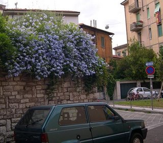small car under blue flowers