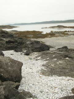 Wickaninnish Beach