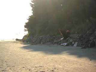 Evening Beach Flying Bird