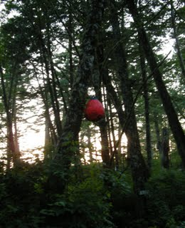 Buoy in tree