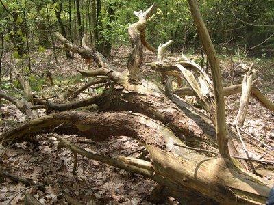 Gnarls Treely