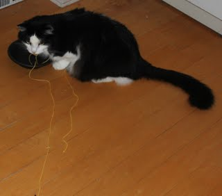 cat taking with string to bowl